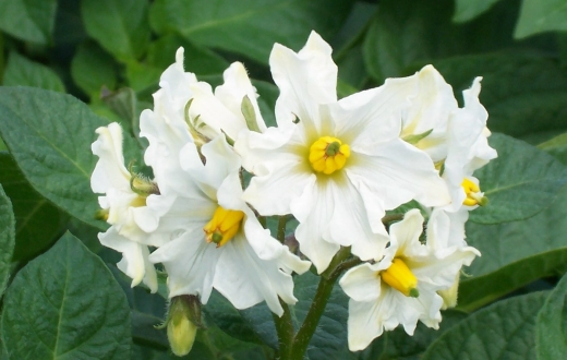 flower-1june.jpg