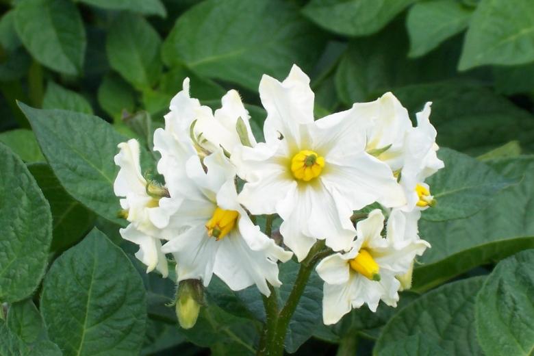 flower 1june